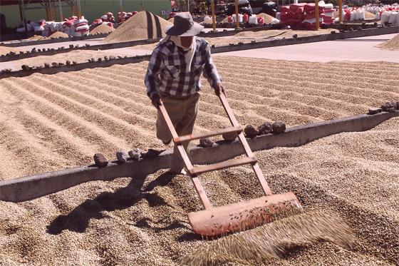 Die-Pergaminos-werden-auf-Beton--oder-Kachelböden-zum-Trocknen-ausgelegt.