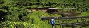 Von den grünen Hügeln Afrikas