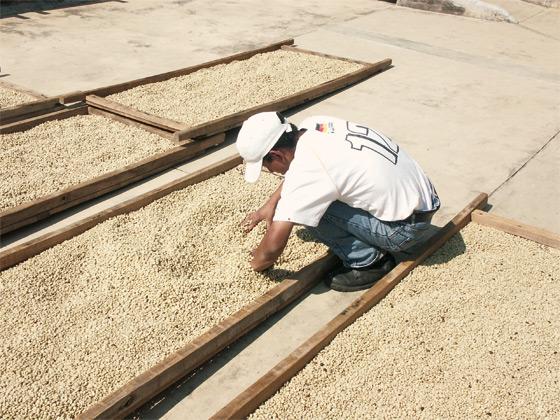 Die-Farmarbeit-4
