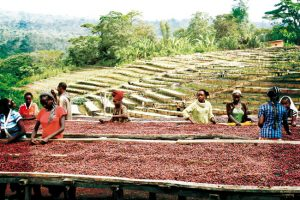 Kaffee & Afrika