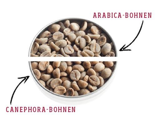 kaffee arabica canephora bohnen