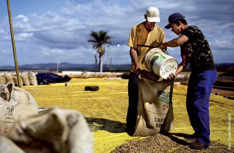 Kaffeebohnen werden nach der Trocknung in einen Kaffeesack gefüllt.