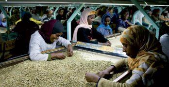Optische Sortierung von Kaffeebohnen per Hand