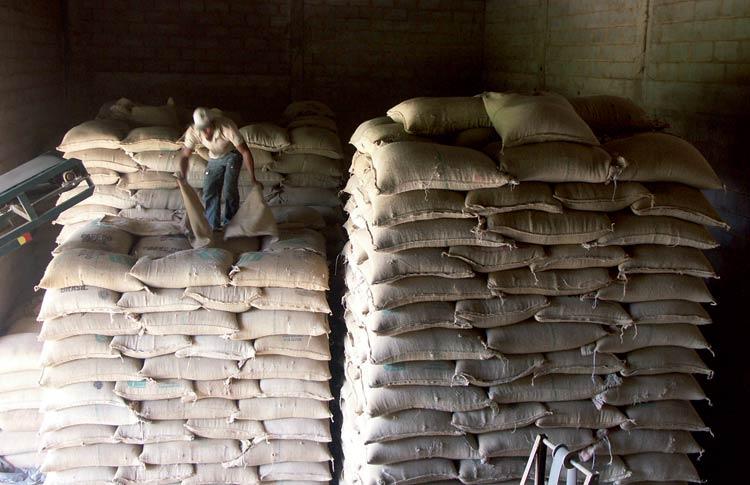 Arbeiter steht auf einem Stapel von Rohkaffeesäcken.